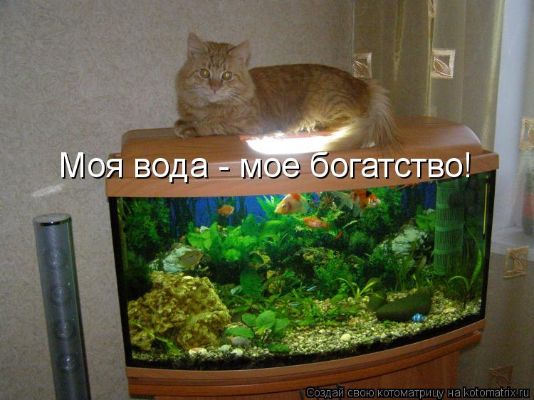 Котоматрица: Моя вода - мое богатство!