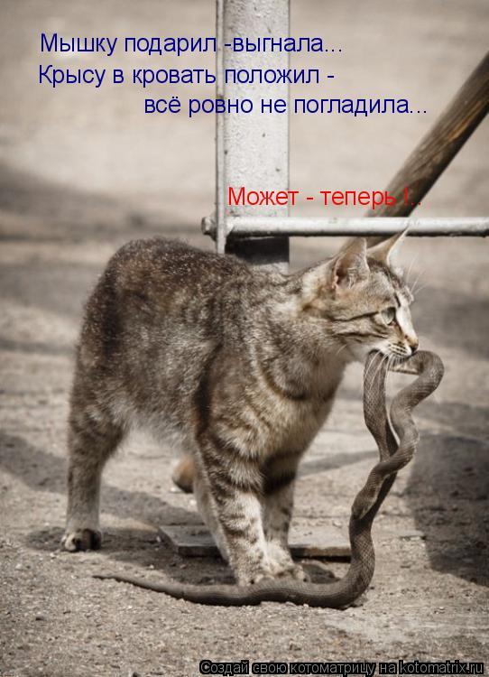 Котоматрица - Мышку подарил -выгнала... Крысу в кровать положил - всё ровно не погла