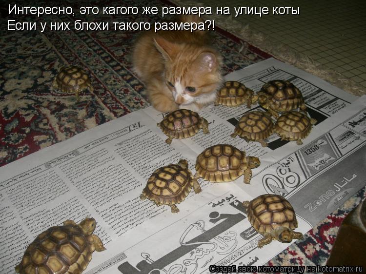Котоматрица: Интересно, это кагого же размера на улице коты Если у них блохи такого размера?!
