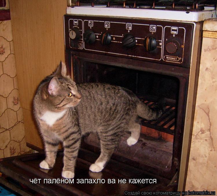 Котоматрица: чёт палёном запахло ва не кажется