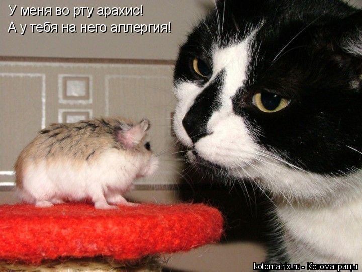 Котоматрица - У меня во рту арахис! А у тебя на него аллергия!