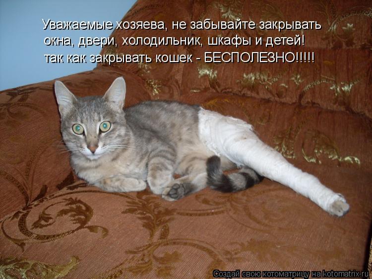Котоматрица: Уважаемые хозяева, не забывайте закрывать окна, двери, холодильник, шкафы и детей! так как закрывать кошек - БЕСПОЛЕЗНО!!!!!