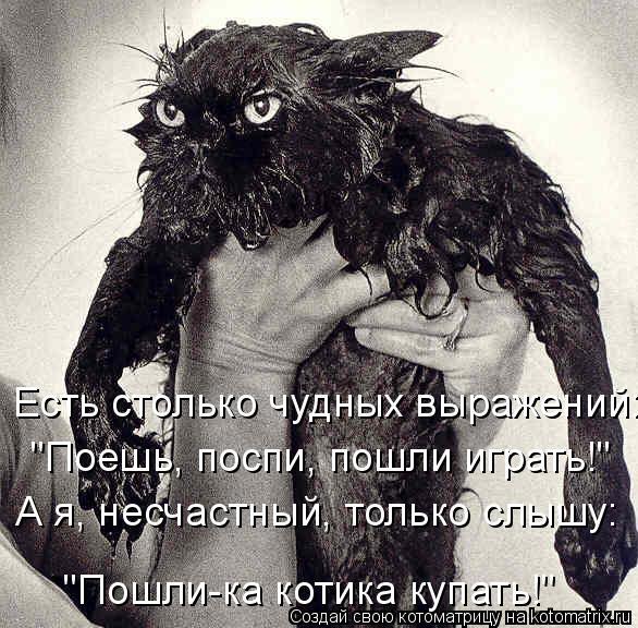 """Котоматрица: """"Пошли-ка котика купать!"""" Есть столько чудных выражений: """"Поешь, поспи, пошли играть!"""" А я, несчастный, только слышу:"""