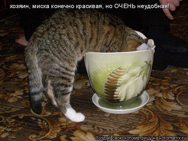 Котоматрица: хозяин, миска конечно красивая, но ОЧЕНЬ неудобная!