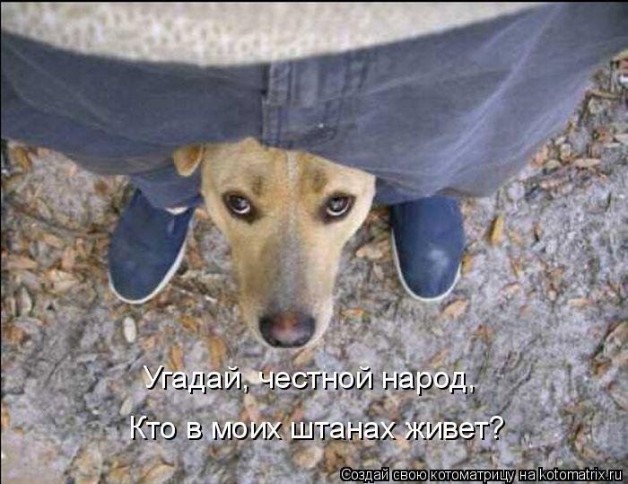 Котоматриця!)))) - Страница 8 958634