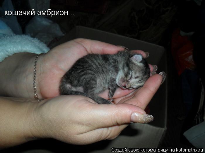 Котоматрица: кошачий эмбрион...