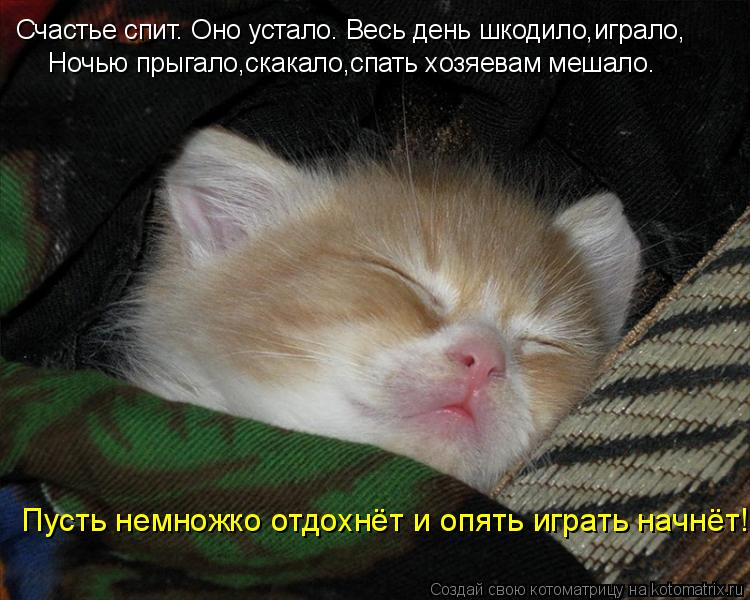 Котоматрица: Счастье спит. Оно устало. Весь день шкодило,играло, Ночью прыгало,скакало,спать хозяевам мешало. Пусть немножко отдохнёт и опять играть нач