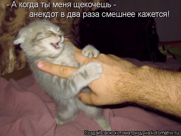 Котоматрица: - А когда ты меня щекочешь -  анекдот в два раза смешнее кажется!