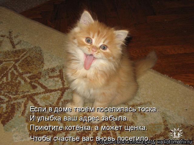 Котоматрица: Если в доме твоём поселилась тоска. И улыбка ваш адрес забыла. Приютите котёнка, а может щенка. Чтобы счастье вас вновь посетило...