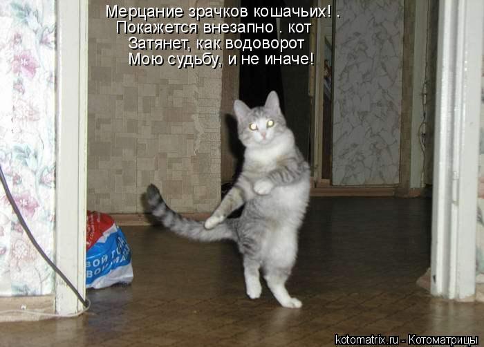 Котоматрица: Мерцание зрачков кошачьих! – Покажется внезапно – кот Затянет, как водоворот Мою судьбу, и не иначе!