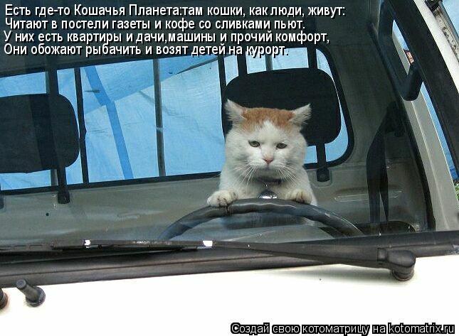 Котоматрица: Есть где-то Кошачья Планета:там кошки, как люди, живут: Читают в постели газеты и кофе со сливками пьют. У них есть квартиры и дачи,машины и пр