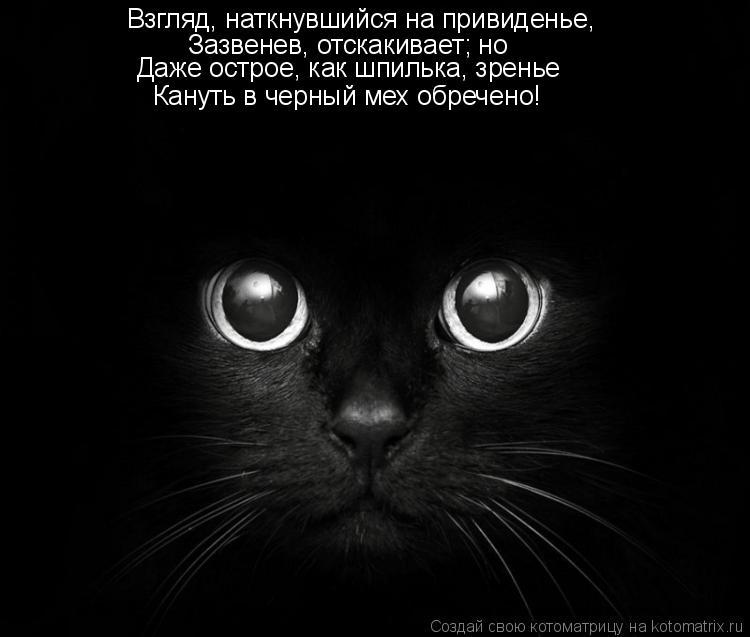Котоматрица: Взгляд, наткнувшийся на привиденье,  Зазвенев, отскакивает; но  Даже острое, как шпилька, зренье  Кануть в черный мех обречено!