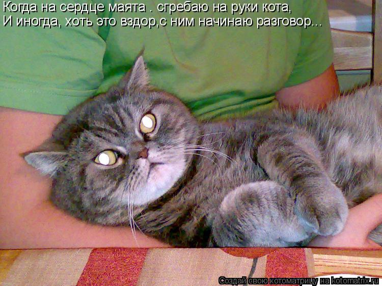 Котоматрица: Когда на сердце маята – сгребаю на руки кота, И иногда, хоть это вздор,с ним начинаю разговор...