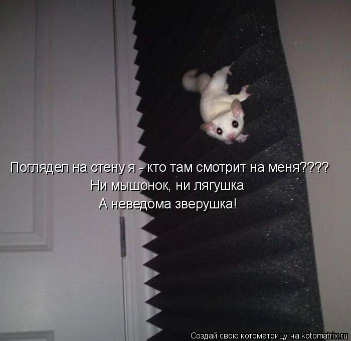Котоматрица: Поглядел на стену я - кто там смотрит на меня???? Ни мышонок, ни лягушка А неведома зверушка!
