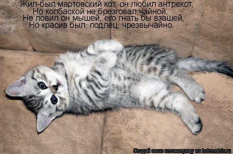 Котоматрица: Жил-был мартовский кот, он любил антрекот,  Но колбаской не брезговал чайной,  Не ловил он мышей, его гнать бы взашей,  Но красив был, подлец, ч