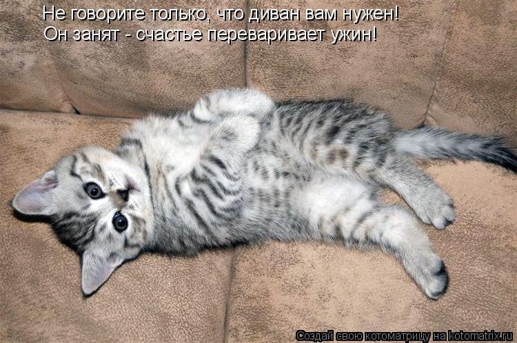 Котоматрица: Не говорите только, что диван вам нужен! Он занят - счастье переваривает ужин!