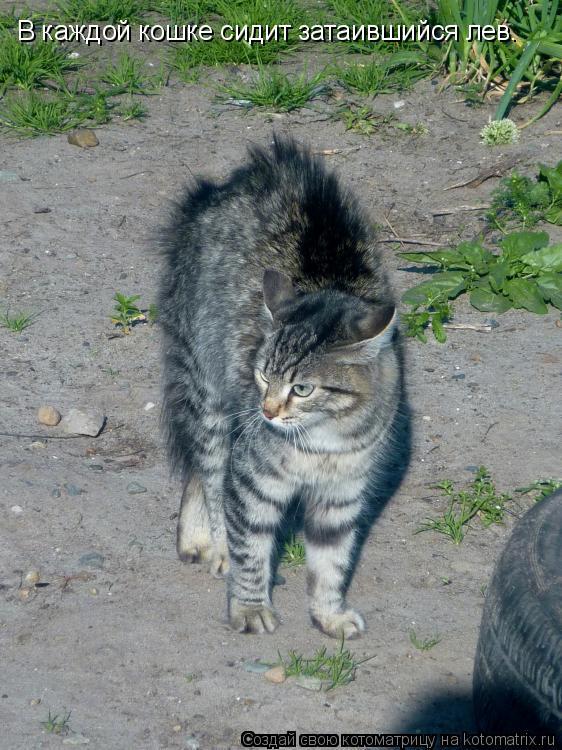 Котоматрица: В каждой кошке сидит затаившийся лев.