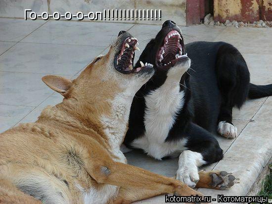 Котоматрица: Го-о-о-о-о-ол!!!!!!!!!!!!!!!