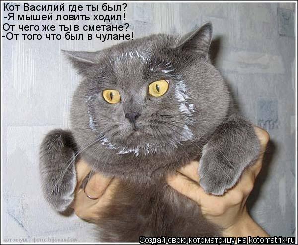 Котоматрица: Кот Василий где ты был? -Я мышей ловить ходил! От чего же ты в сметане? -От того что был в чулане!