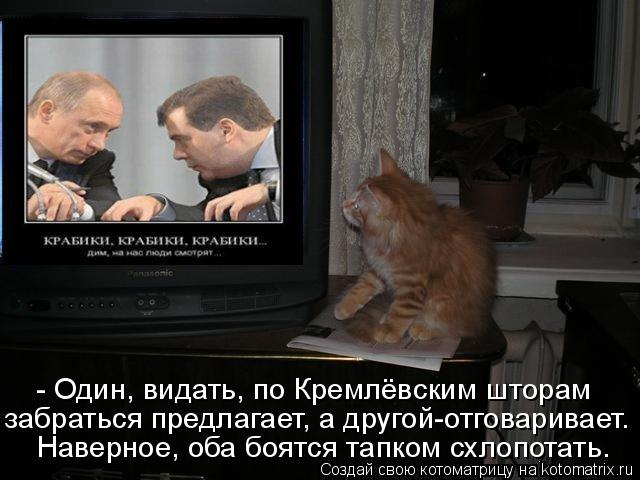 Котоматрица: Наверное, оба боятся тапком схлопотать. забраться предлагает, а другой-отговаривает. - Один, видать, по Кремлёвским шторам