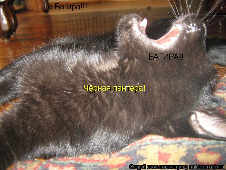 Котоматрица: о Багира!!! Чёрная пантера! БАГИРА!!!