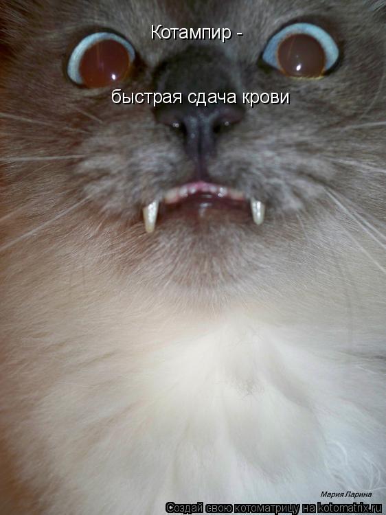 Котоматрица: Котампир -  быстрая сдача крови