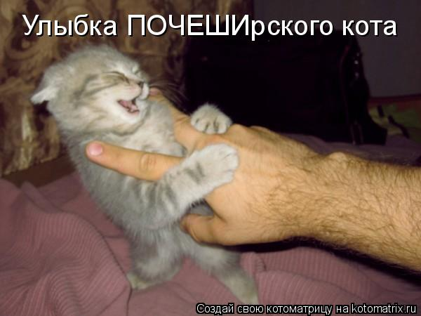 Котоматрица - Улыбка ПОЧЕШИрского кота