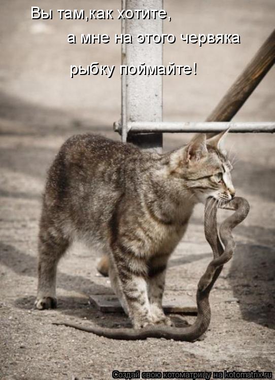 Котоматрица: Вы там,как хотите, а мне на этого червяка  рыбку поймайте!