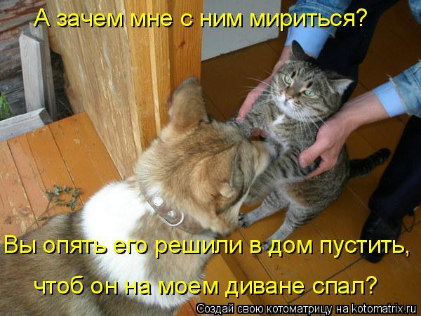 Котоматрица: А зачем мне с ним мириться?  Вы опять его решили в дом пустить, чтоб он на моем диване спал?