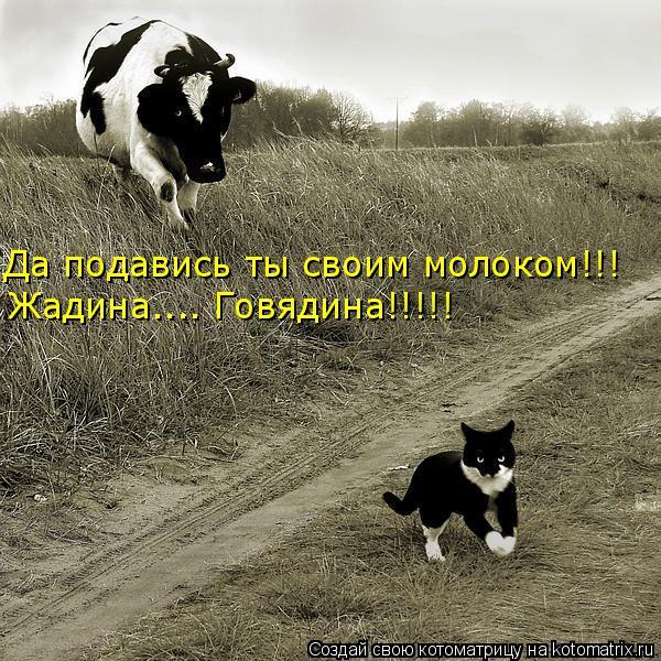 Котоматрица: Да подавись ты своим молоком!!! Жадина.... Говядина!!!!!