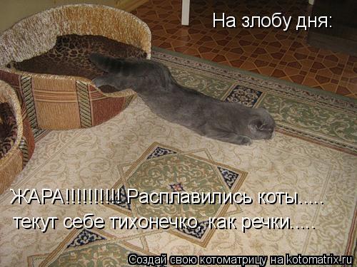 Котоматрица: На злобу дня: ЖАРА!!!!!!!!!! Расплавились коты..... текут себе тихонечко, как речки.....