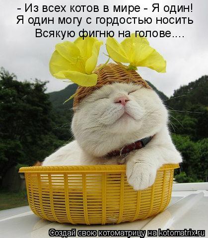 Котоматрица: - Из всех котов в мире - Я один! Я один могу с гордостью носить Всякую фигню на голове....