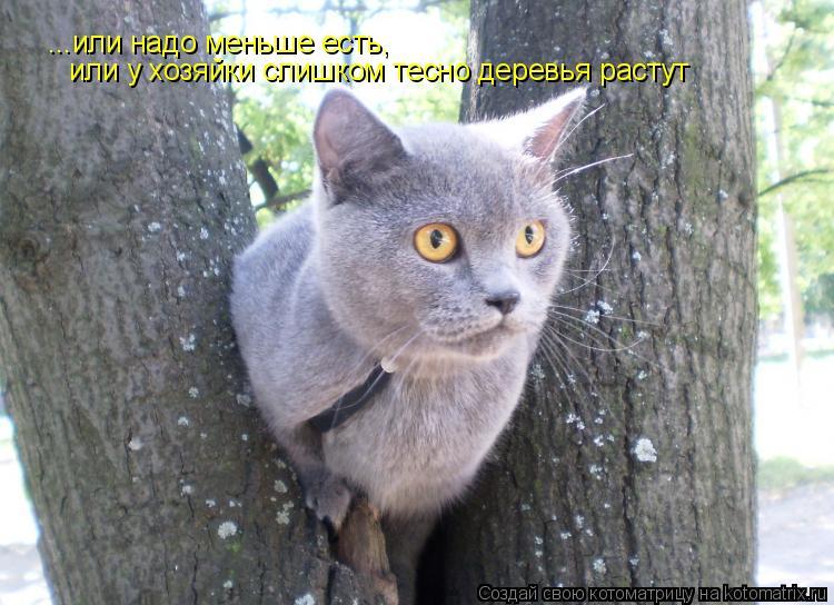 Котоматрица: ...или надо меньше есть,  или у хозяйки слишком тесно деревья растут