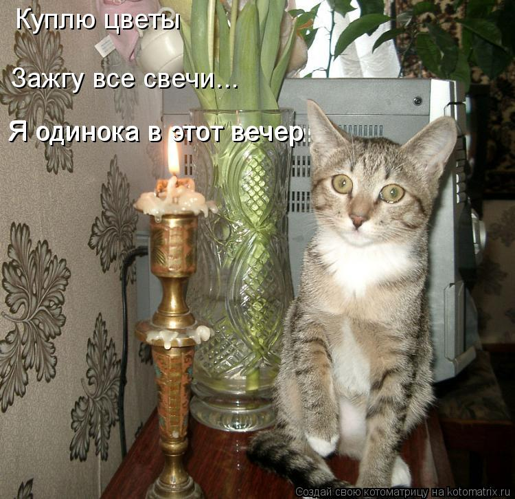 Котоматрица: Куплю цветы Зажгу все свечи... Я одинока в этот вечер Я одинока в этот вечер
