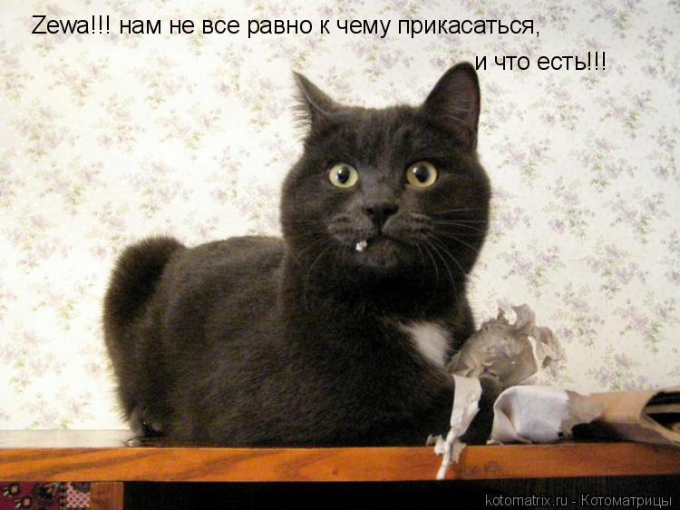 Котоматрица: Zewa!!! нам не все равно к чему прикасаться, и что есть!!!