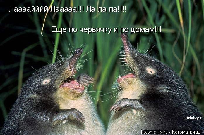 Котоматрица: Лаааайййй Лааааа!!! Ла ла ла!!!! Еще по червячку и по домам!!!