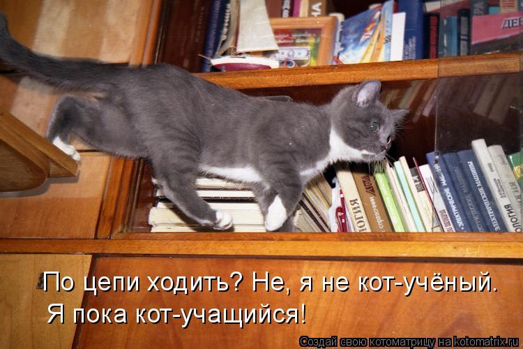 Котоматрица: По цепи ходить? Не, я не кот-учёный. Я пока кот-учащийся!