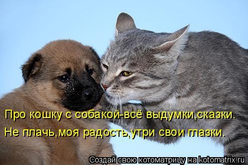 Котоматрица: Про кошку с собакой-всё выдумки,сказки. Не плачь,моя радость,утри свои глазки.