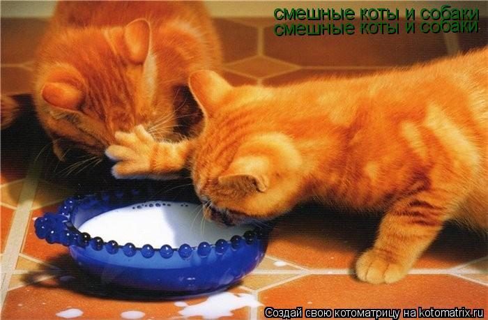 Смешные фото коты и собаки