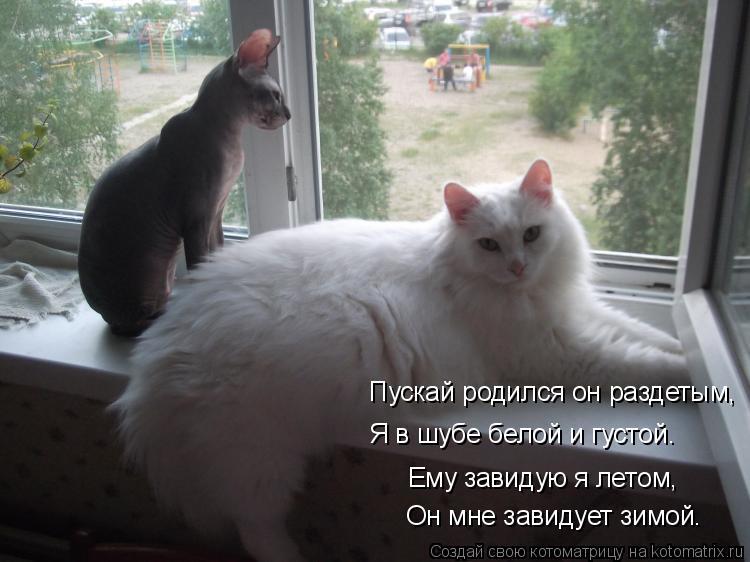 Котоматрица - Ему завидую я летом, Он мне завидует зимой. Пускай родился он раздетым