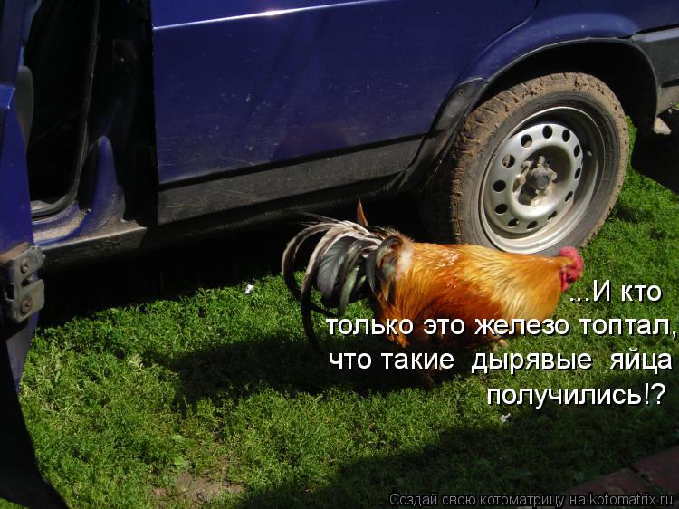 Котоматрица: ...И кто  только это железо топтал,  что такие  дырявые  яйца получились!?