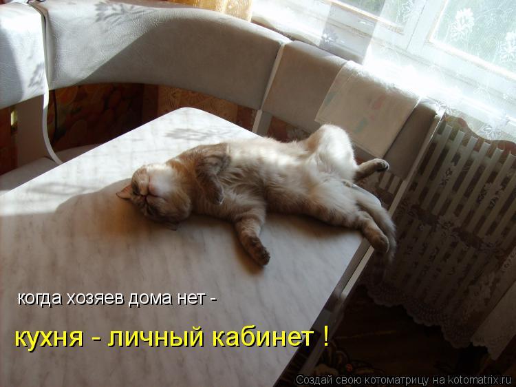 Котоматрица - когда хозяев дома нет -  кухня - личный кабинет !