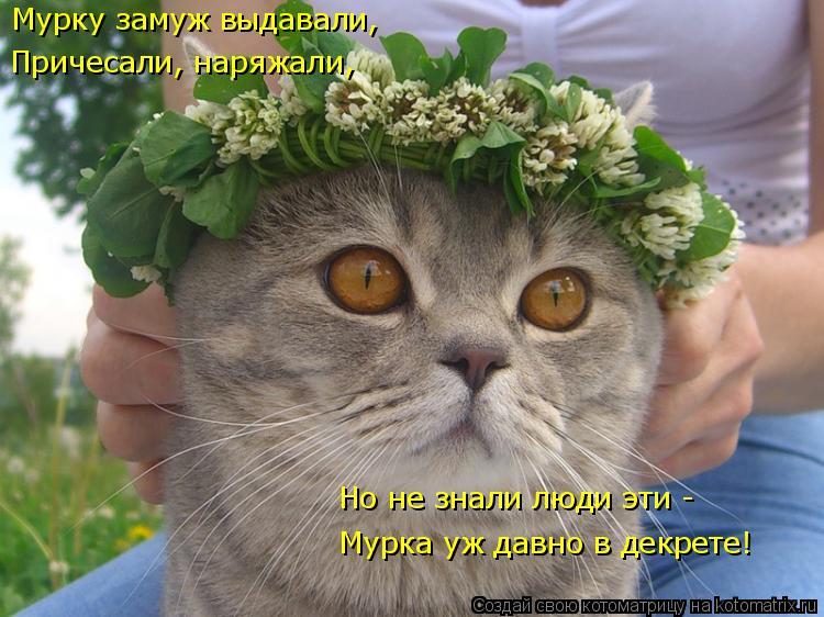 Котоматриця!)))) - Страница 8 961254