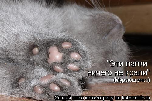 "Котоматрица: ничего не крали"" ""Эти лапки  (Мурзющенко)"