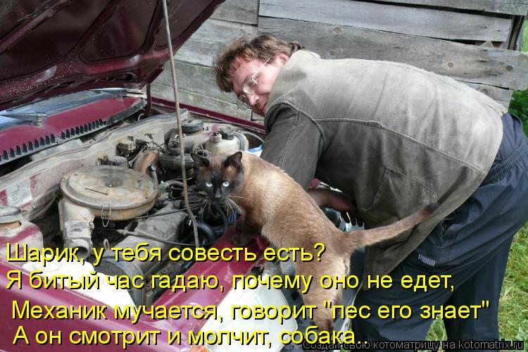 """Котоматрица: Шарик, у тебя совесть есть?  Я битый час гадаю, почему оно не едет,  Механик мучается, говорит """"пес его знает"""" А он смотрит и молчит, собака.."""