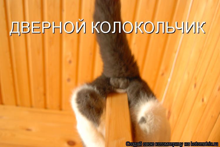 Котоматрица - ДВЕРНОЙ КОЛОКОЛЬЧИК