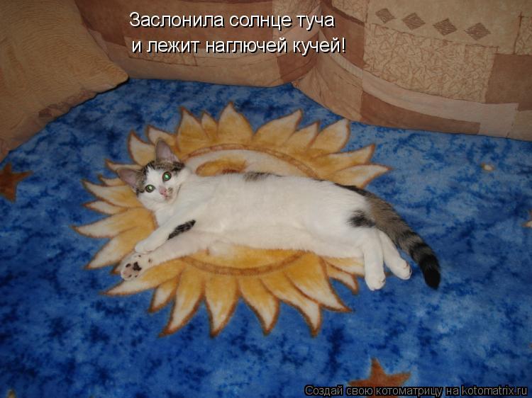 Котоматрица - Заслонила солнце туча  и лежит наглючей кучей!