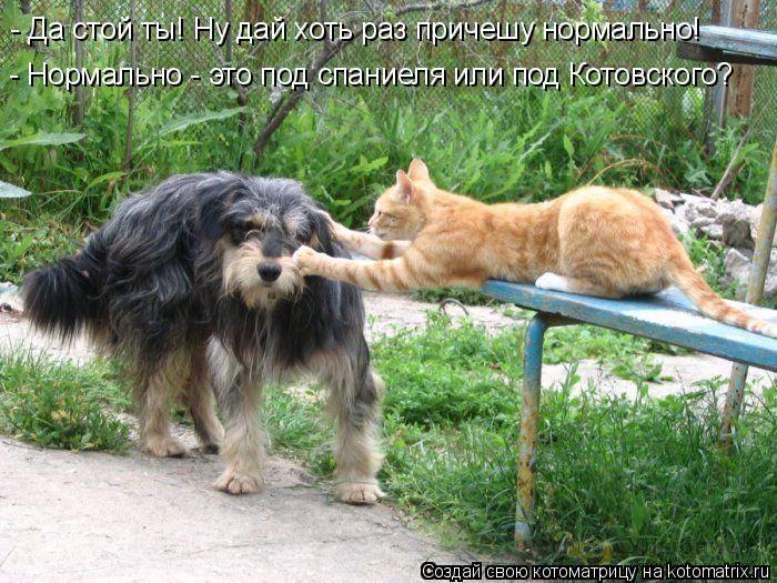 Котоматрица: - Нормально - это под спаниеля или под Котовского? - Да стой ты! Ну дай хоть раз причешу нормально!