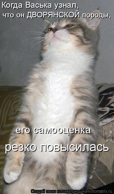 Котоматрица - Когда Васька узнал,  что он ДВОРЯНСКОЙ породы,  его самооценка  резко