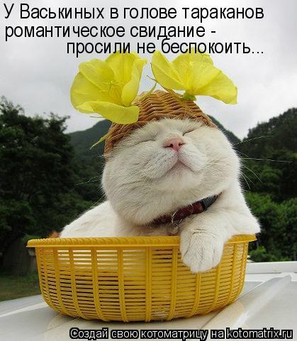 Котоматрица: У Васькиных в голове тараканов   романтическое свидание - просили не беспокоить...
